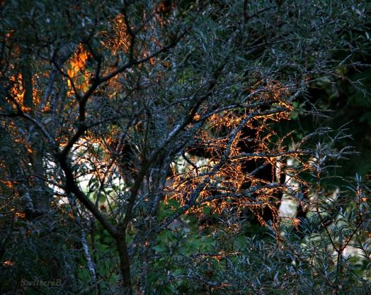 Tree Glow 2 SB