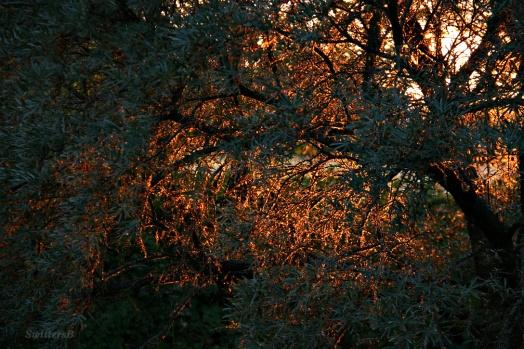 Tree Glowing 3
