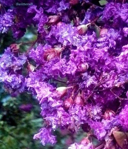 battered petals 2 SB