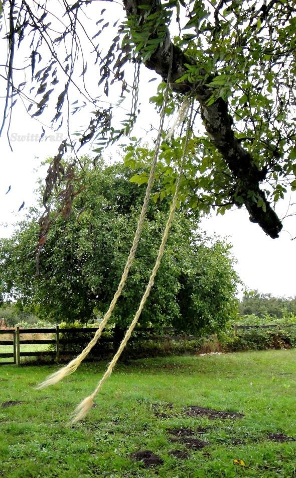 Old Swing Wind SB