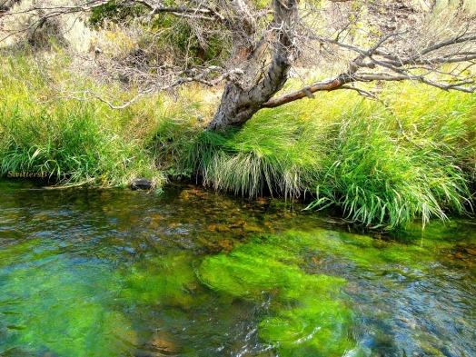 tree moss bottom SB