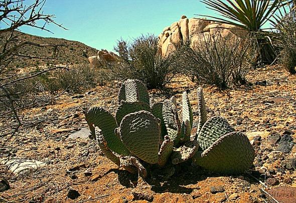 cactus JT SwittersB