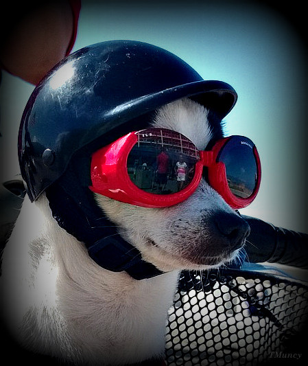 doggles1