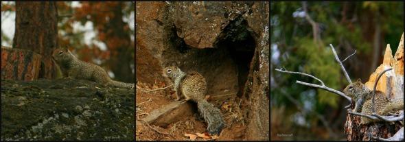 Squirrel Sentinels