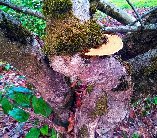 gnarly tree SwittersB & Fly Fishing