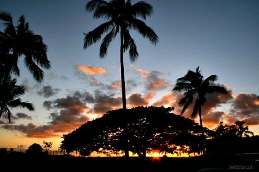 Honolulux Morning SB