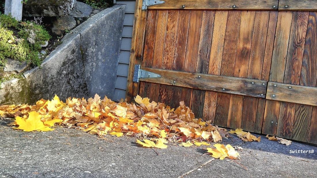Hvy Grain Wood Doors Leaves SB