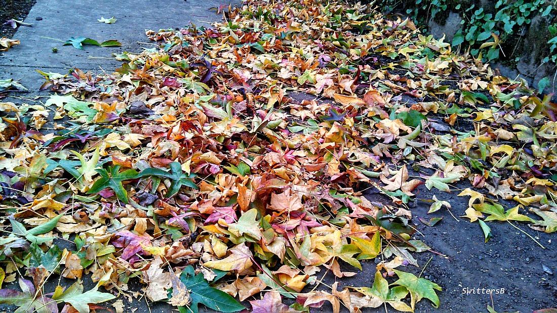Leaves Sidewalk SwittersB