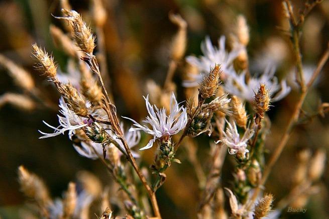 Old Flowers Bucky