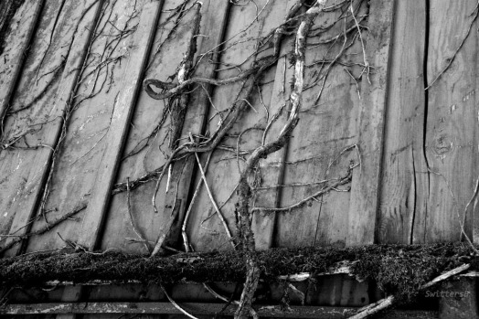 Old Vines Barn SwittersB