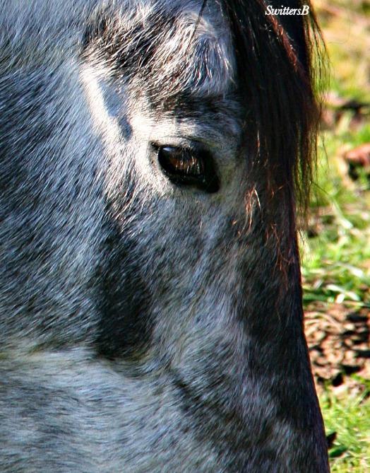Pony5 SwittersB