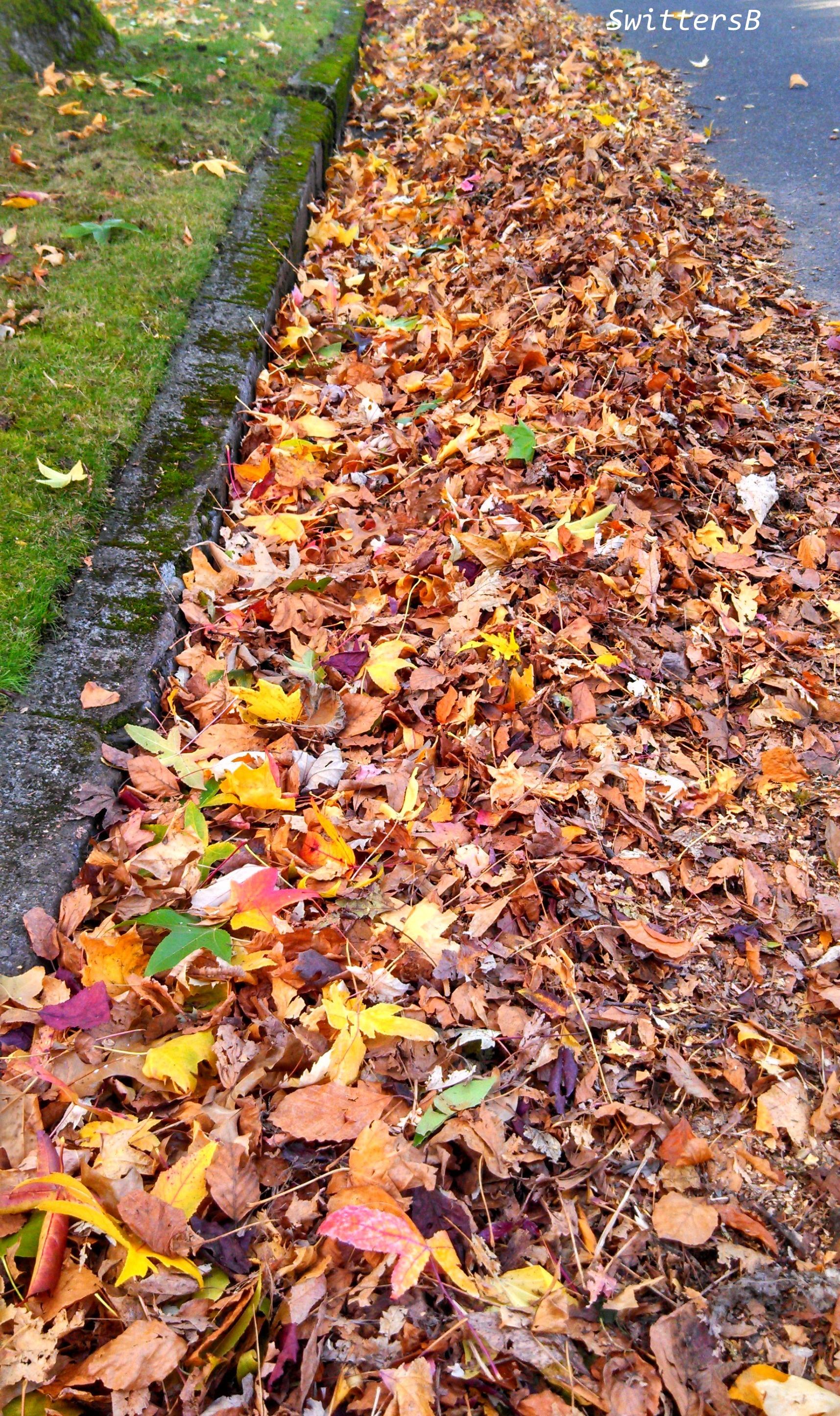 Row Leavesx SwittersB