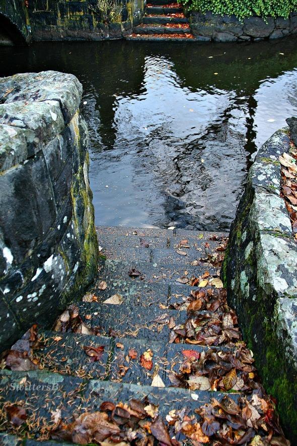 Steps to Brook SwittersB