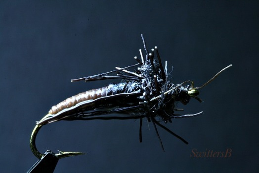 Caddis Pupa SwittersB