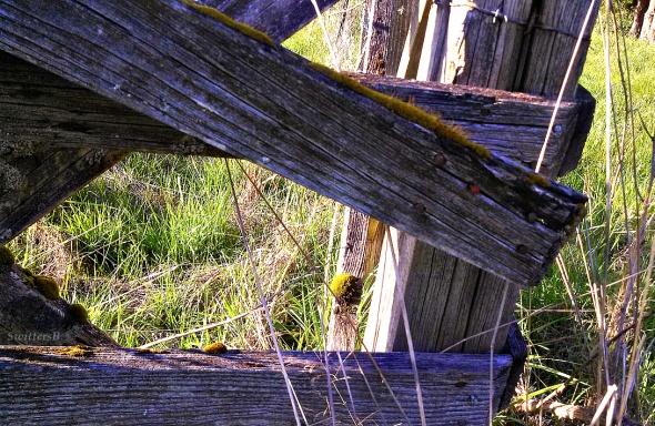 Corner Post & Moss SwittersBx