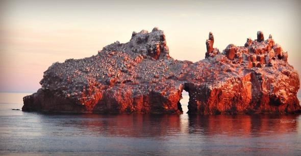 Los Islotes SwittersB