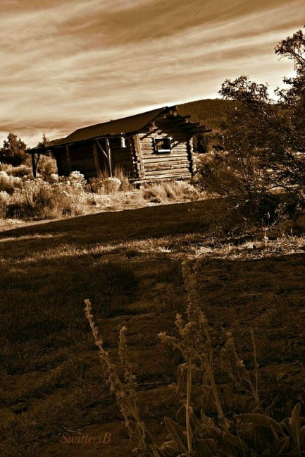 old cabin weedsbw-SB