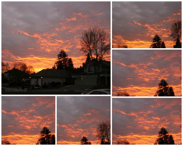 Sunrise Collage SwittersB