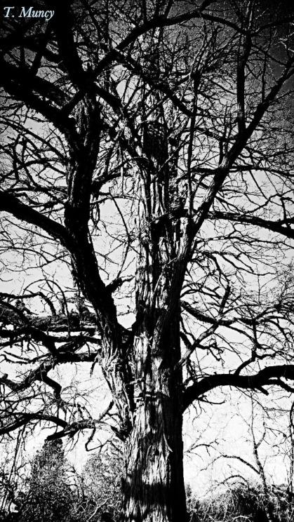 Tree BW Silhouette Life