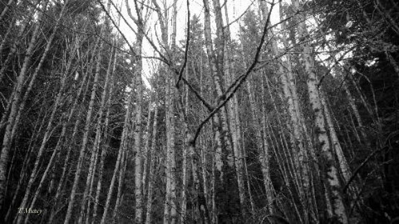 woods 2 ™ SwittersB