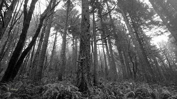 woods ™ SwittersB