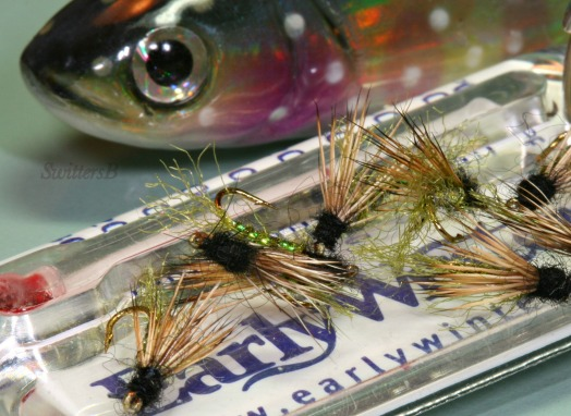 X Caddis Trout Early W SwittersB