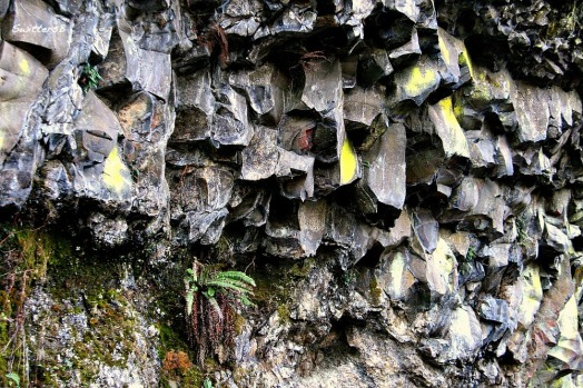 Basalt and Lichen SwittersB