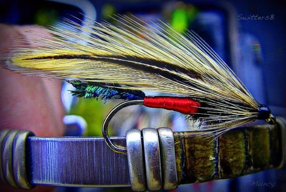 spruce fly ™ SwittersB