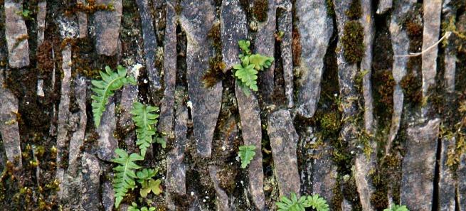 vert stone ferns