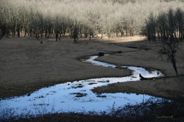Wetland SB1