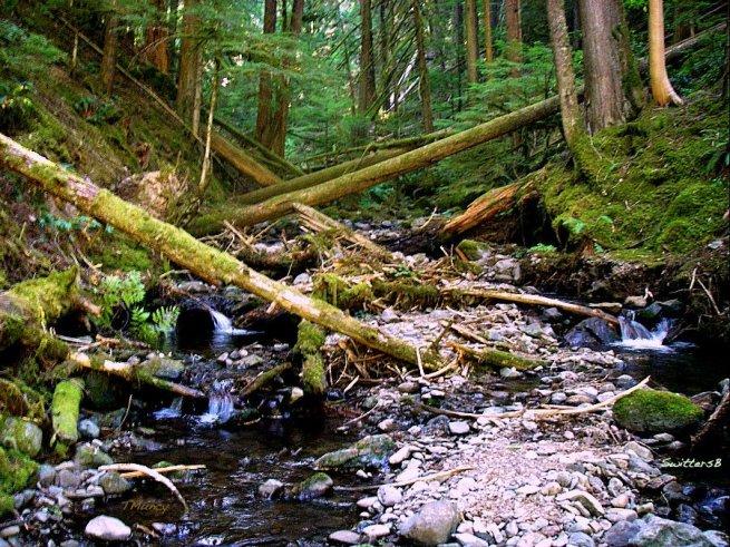 Camp Creek Oregon TM SwittersB