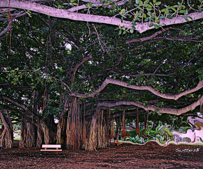 photography-banyon tree-waikiki-oahu-SwittersB