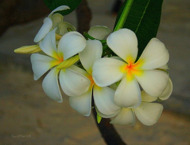 photography-flowers-tropical-travel-swittersb