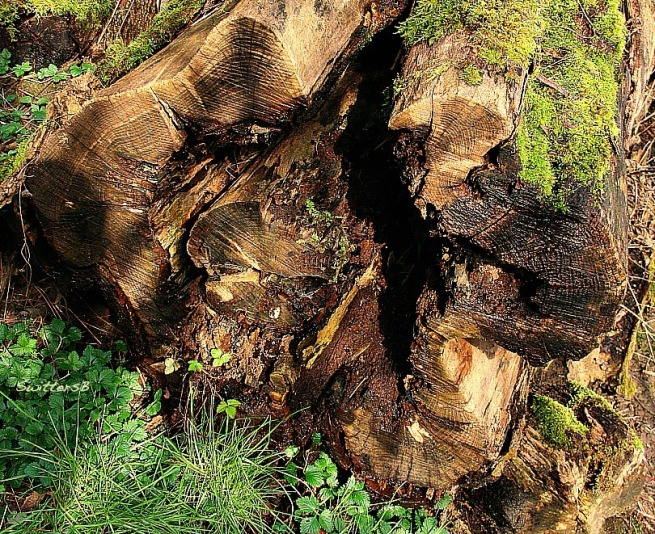 photography-log-trees-nature-SwittersB-decay