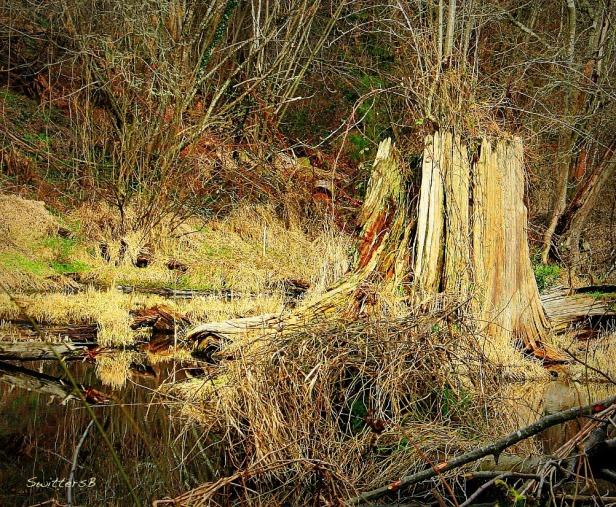 photography-nature-Reed Lake-stump-SwittersB