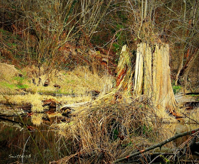 photography-nature-Reed Lake-stump-SwittersB