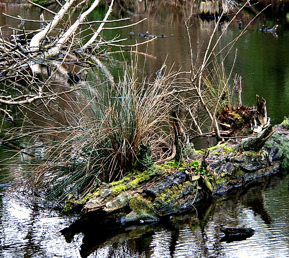 photography-pond-nature-old log-reed lake-swittersb