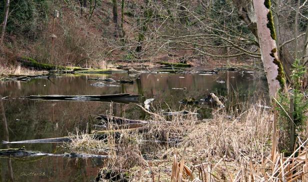 Photography-Reed Lake-Habitat-Portland-SwittersB