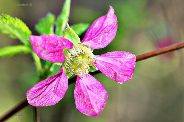 Photography-Flower-Nature-Bucky-SwittersB