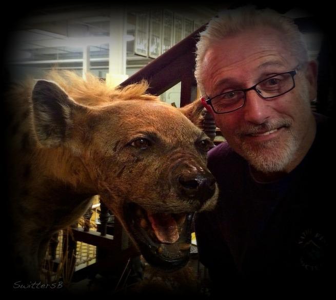 Photography-Hyena-Animals-SwittersB