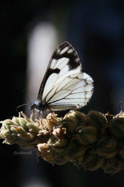 Photography-Moth-Macro-Nature-SwittersB