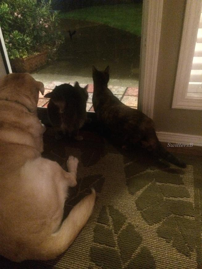 Photography-Pets-Waiting-Loyal-SwittersB