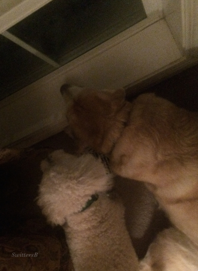 photography-pets-waiting-loyalty-SwittersB