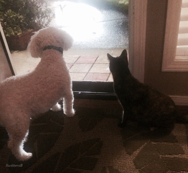 photography-pets-waiting-swittersb