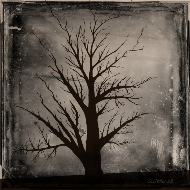 Photography-Stark Tree-Black White-SwittersB