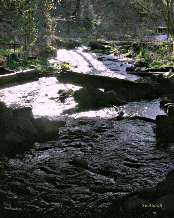 photography-stream-shade-crystal springs-portland-SwittersB