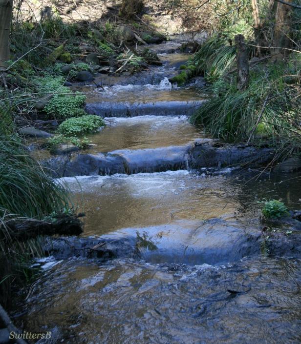 photography-stream-stairs-water-habitat-Oregon-SwittersB