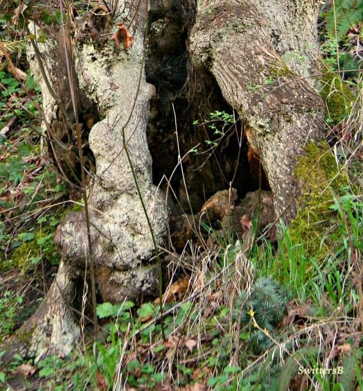 photography-tree-trunk-hollow-shelter-swittersB