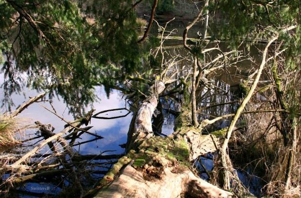 photography-trees-habitat-water-SwittersB