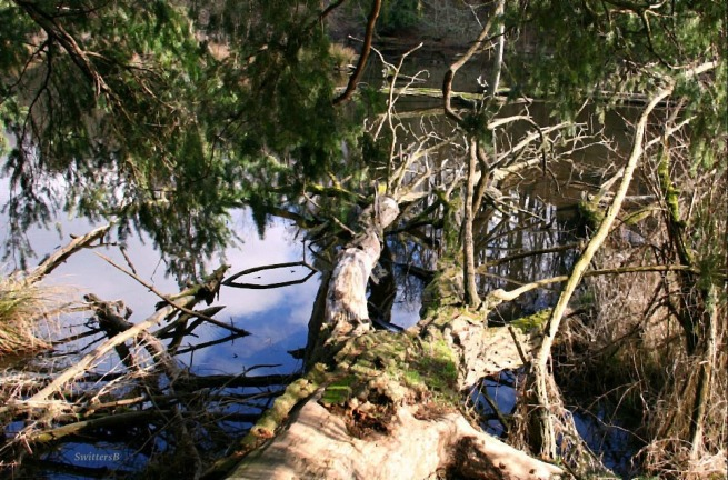 photography-trees-habitat-water-SwittersB